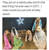nativity: They put on a nativity play and it's the  best thing I've ever seen in 2017 !  mean would you just look at baby  Jesus!
