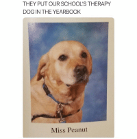 Cute, Dogs, and Funny: THEY PUT OUR SCHOOL'S THERAPY  DOG IN THE YEARBOOK  Miss Peanut God bless therapy dogs. God bless Miss Peanut. I absolutely love dogs. Only good in their hearts. This post made me really happy and I hope it does the same for you. SO DAMN CUTE.