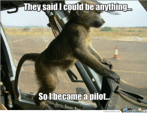 Birthday - Best Posts in Thread: Happy Birthday Zambo! | Gatorchatter: They said lI could beanything  Solbecame a pilot.  memecenter.comemeCenterLO Birthday - Best Posts in Thread: Happy Birthday Zambo! | Gatorchatter