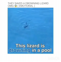 Love, Memes, and Music: THEY SAVED A DROWNING LIZARD  OMG(EMOTIONAL)  This lizard IS  drowning in a pool Music is Love Power by @DonnyArcade Available Everywhere @pantheoneliterecords @teana_n_ashley_aka_nova @kodiak_89 - truth knowledge wisdom philosophy science astronomy sacredgeometry…""