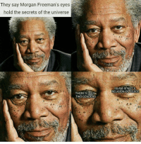 Memes, Islam, and Peace: They say Morgan Freeman's eyes  hold the secrets of the universe  Two GENDERS  ISLAM IS NOT A  RELIGION OF PEACE This should ruffle some feathers. 🙃