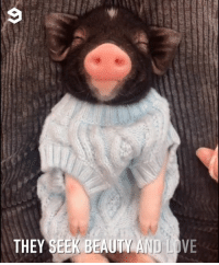 Dank, Love, and 🤖: THEY SEEK BEAUTY AND LOVE 2019 is the year of pig
