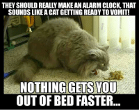 Clock, Memes, and 🤖: THEY SHOULD REALLY MAKE ANALARM CLOCK, THAT  SOUNDS LIKEACATGETTING READY TO VOMIT!  NOTHING GETS VOU  OUT OF BED FASTER Yep!! Via Grumpy Cat Memes