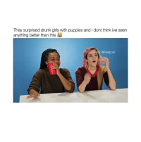 Follow @okdayum for more! ❤️: They surprised drunk girls with puppies and i dont think ive seen  anything better than this  Textpost Follow @okdayum for more! ❤️