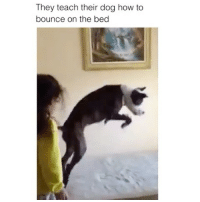 Future, Memes, and Ted: They teach their dog how to  bounce on the bed If my future kids do anything with their lives I hope it's this. @hilarious.ted posts the best animal memes.