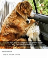 Stupidity: They think they're going to the vet when in reality  they are headed to the dog park.  tastefullyoffensive  dogs are so stupid i want ten