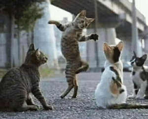 They were called humans. And they walked like this!: They were called humans. And they walked like this!