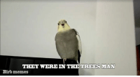 birb: THEY WERE IN THE TREES MAN  Birb memes