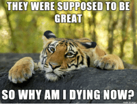 Tony the Tiger sues Kellogg's after pancreatic failure: THEY WERE SUPPOSED TO BE  GREAT  SO WHY AML L DYING NOW?  made on imgur Tony the Tiger sues Kellogg's after pancreatic failure