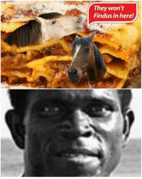 Serge horse meat meme: They won't  Findus in here! Serge horse meat meme