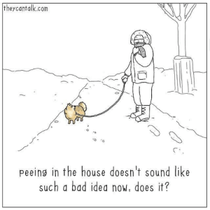 Bad, House, and Idea: theycantalk.com  0  peeing in the house doesn't sound like  such a bad idea now, does it? bundle up
