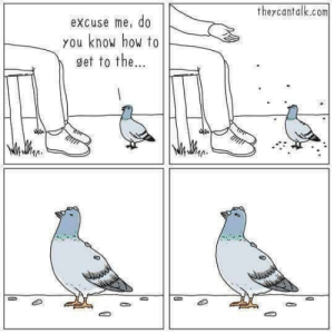 Slowly starts pecking by mootjuggler MORE MEMES: theycantalk.com  excuse me, do  you know how to  get to the... Slowly starts pecking by mootjuggler MORE MEMES