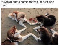 Boy, Summon, and Ever: theyre about to summon the Goodest Boy  Ever