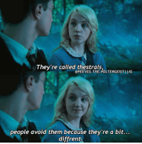 """Yeah yeah its """"different"""" not """"diffrent"""" but I'm not going back and making the entire edit again. Q- what's your favourite food? Follow my backup @mr.scamander