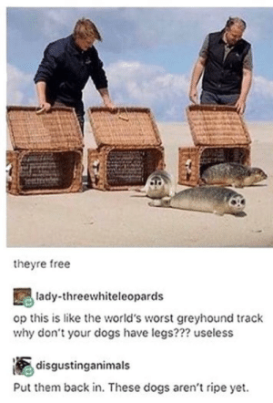 Dogs, Funny, and Free: theyre free  lady-threewhiteleopards  op this is like the world's worst greyhound track  why don't your dogs have legs??? useless  disgustinganimals  Put them back in. These dogs aren't ripe yet. These tadpoles look funny