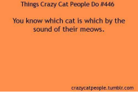 Crazy, Memes, and Tumblr: Things Crazy Cat People Do H446  You know which cat is which by the  sound of their meows.  crazy catpeople.tumblr.com
