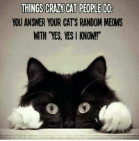 """Grumpy Cat: THINGS CRAZY CAT PEOPLE DO  YOU ANSWER YOUR CATS RANDOM MEONS  WTH """"YES, YES KNOW!!"""""""