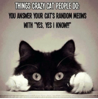 Cats, Crazy, and Memes: THINGS CRAZY CAT PEOPLE DO  YOU ANSWER YOUR CATS RANDOM MEOWS  WTH YES, YES KNOW! Cat people know