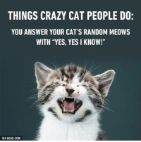 "Don't call me crazy! I'm not crazy! Meow! http://9gag.com/gag/a37v4o5?ref=fbp: THINGS CRAZY CAT PEOPLE DO:  YOU ANSWER YOUR CAT'S RANDOM MEOWS  WITH ""YES, YES I KNOW!""  VIA 9GAG.COM Don't call me crazy! I'm not crazy! Meow! http://9gag.com/gag/a37v4o5?ref=fbp"