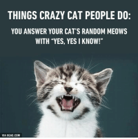 "9gag, Crazy, and Memes: THINGS CRAZY CAT PEOPLE DO:  YOU ANSWER YOUR CAT'S RANDOM MEOWS  WITH ""YES, YES I KNOW!""  VIA 9GAG.COM"