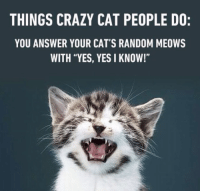 "Crazy, Memes, and 🤖: THINGS CRAZY CAT PEOPLE DO:  YOU ANSWER YOUR CAT'S RANDOM MEOWS  WITH ""YES, YES I KNOW!"" Guilty"