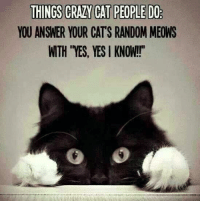 """Memes, 🤖, and Random: THINGS CRAZY CAT PEOPLEDO  YOU ANSWER YOUR CATS RANDOM MEONS  WTH YES, YES KNOW!!"""" Admit it."""