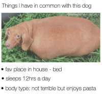 Memes, 🤖, and Commons: Things have in common with this dog  asleepinthemuseum  fav place in house bed  sleeps 12hrs a day  body type: not terrible but enjoys pasta @asleepinthemuseum and I have a lot in common with this ole woofer 😂