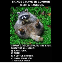 Staying Up All Night: THINGS I HAVE IN COMMON  WITH A RACCOON.  1) DARK CIRCLES AROUND THE EYES.  2) STAY UP ALL NIGHT.  3) EATS JUNK.  4) CUTE.  5) A LITTLE CHUBBY  6) I WILL FIGHT YOU.  7) POSSIBLY RABID