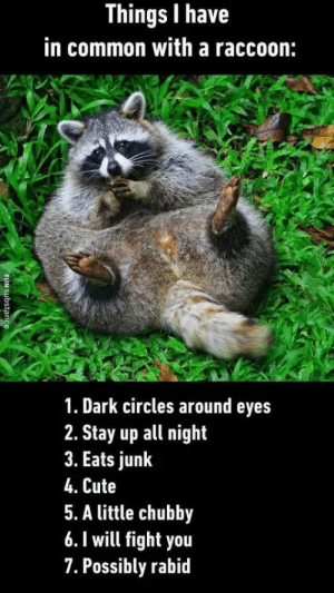 Cute, Common, and Raccoon: Things I have  in common with a raccoon:  1. Dark circles around eyes  2. Stay up all night  3. Eats junk  4. Cute  5. A little chubby  6. 1 will fight you  7. Possibly rabid Things I have in common a raccoon