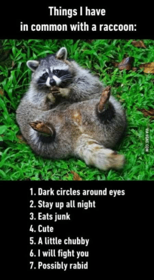 9gag, Cute, and Animal: Things I have  in common with a raccoon:  1. Dark circles around eyes  2. Stay up all night  3. Eats junk  4. Cute  5. A little chubby  6.I will fight you  7. Possibly rabid  VIA 9GAG.COM 28 Amusing Animal Pictures That Are Guarantied To Make You Laugh - I Can Has Cheezburger?