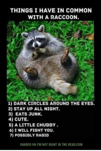 Submitted by Andy Wilson: THINGS I HAVE IN COMMON  WITH A RACCOON.  1) DARK CIRCLES AROUND THE EYES.  2) STAY UP ALL NIGHT.  3) EATS JUNK.  4) CUTE.  5) A LITTLE CHUBBY  6) I WILL FIGHT YOU.  7) POSSIBLY RABID  SHARED ON I'M NOT RIGHT IN THE HEAD,COM Submitted by Andy Wilson