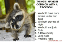 Raccoon: THINGS I HAVE IN  COMMON WITH A  RACCOON:  1. We both have dark  circles under our  eyes  2. We both stay up all  night  3. We both eat junk  4. Cute  5. A little chubby  6. Long nails  7. Possibly rabid  women after50.com