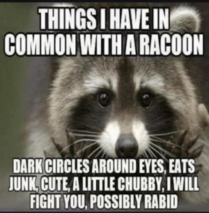 Cute, Common, and Circles: THINGS I HAVE IN  COMMON WITH A RACOON  DARK CIRCLES AROUND EYES, EATS  JUNK, CUTE, A LITTLE CHUBBY, I WILL  FIGHT YOU, POSSIBLY RABID