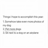 Dogs, Memes, and Airplane: Things I hope to accomplish this year:  1. Somehow take even more photos of  my dog  2.Pet more dogs  @dogsbeingbasio  3. Sit next to a dog on an airplane Emphasis on number 3. @dogpartying