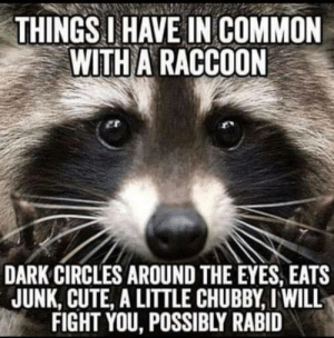 DV Bedlam: THINGS IHAVE IN COMMON  WITH A RACCOON  DARK CIRCLES AROUND THE EYES, EATS  JUNK, CUTE, A LITTLE CHUBBY, I WILL  FIGHT YOU, POSSIBLY RABID DV Bedlam