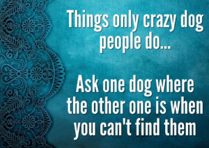 Guilty.... LOL: Things only crazy dog  people do..  Ask one dog where  the other one is when  you can't find them Guilty.... LOL