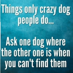 Oh lordy the cringe :O: Things only crazy dog  people do..  Ask one dog where  the other one is when  you can't find them Oh lordy the cringe :O