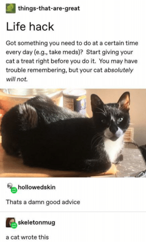 Day E: | things-that-are-great  Life hack  Got something you need to do at a certain time  every day (e.g., take meds)? Start giving your  cat a treat right before you do it. You may have  trouble remembering, but your cat absolutely  will not.  hollowedskin  Thats a damn good advice  skeletonmug  a cat wrote this