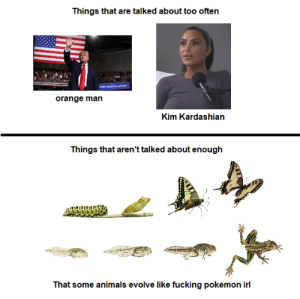 too true tho: Things that are talked about too often  orange man  Kim Kardashian  Things that aren't talked about enough  That some animals evolve like fucking pokemon irl too true tho