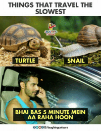 Hoon: THINGS THAT TRAVEL THE  SLOWEST  TURTLE  SNAIL  BHAI BAS 5 MINUTE MEIN  AA RAHA HOON  OOOO /laughingcolours