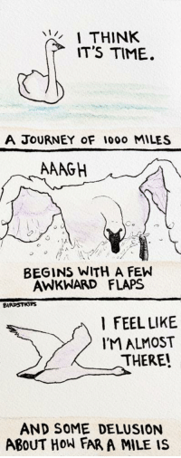 <p>Gotta start somewhere! [OC]</p>: THINK  IT'S TIME  A JOURNEY oF 1000 MILES  AAAGH  BEGINS WITH A FEW  AWKWHARD FLAPS  BIRDSTRTPS  l FEEL LIKE  IM ALMOST  THERE!  AND SOME DELUSION  ABoUT HOW FAR A MILE IS <p>Gotta start somewhere! [OC]</p>