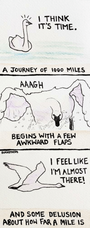 omg-images:  Gotta start somewhere [OC]: THINK  IT'S TIME  A JOURNEY oF 1000 MILES  AAAGH  BEGINS WITH A FEW  AWKWHARD FLAPS  BIRDSTRTPS  l FEEL LIKE  IM ALMOST  THERE!  AND SOME DELUSION  ABoUT HOW FAR A MILE IS omg-images:  Gotta start somewhere [OC]