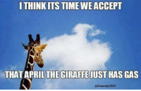 April The Giraffe: THINK ITS TIME WEACCEPT  THAT APRIL THE GIRAFFE JUST HAS GAS  Comedy 1031
