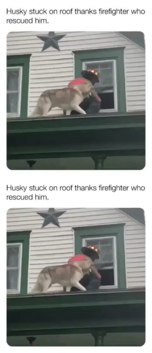Think the dog was less stressed than the rescuer.: Think the dog was less stressed than the rescuer.