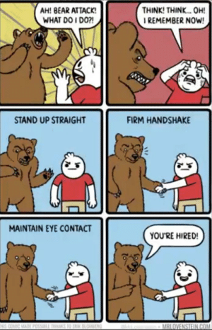 Glad I survived huh by Paul-Stefan MORE MEMES: THINK! THINK. OH!  I REMEMBER NOW!  AH! BEAR ATTACK!  WHAT DO I DO?!  STAND UP STRAIGHT  FIRM HANDSHAKE  MAINTAIN EYE CONTACT  YOU'RE HIRED!  HIS COMIC MADE POSSILL THANKS 10 LNIK BLOBENG  MRLOVENSTEIN.COM Glad I survived huh by Paul-Stefan MORE MEMES