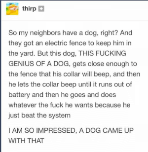 24 Times Tumblr Users Reported Back From the Real World - Imgur: thirp  So my neighbors have a dog, right? And  they got an electric fence to keep him in  the yard. But this dog, THIS FUCKING  GENIUS OF A DOG, gets close enough to  the fence that his collar will beep, and then  he lets the collar beep until it runs out of  battery and then he goes and does  whatever the fuck he wants because he  just beat the system  I AM SO IMPRESSED, A DOG CAME UP  WITH THAT 24 Times Tumblr Users Reported Back From the Real World - Imgur