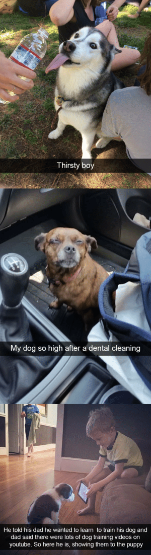 animalsnaps:Animal snaps: Thirsty boy   My dog so high after a dental cleaning   DONT  THE  REC  He told his dad he wanted to learn to train his dog and  dad said there were lots of dog training videos on  youtube. So here he is, showing them to the puppy animalsnaps:Animal snaps