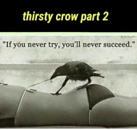 "Thirsty: thirsty crow part 2  ""If you never try, you'll never succeed."""