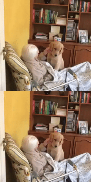 This 5 months puppy brings a lot of joy to his 100 years old grandma (via): This 5 months puppy brings a lot of joy to his 100 years old grandma (via)