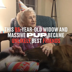 After being widowed over 30 years ago, Sally could go days without seeing anybody, until one day her neighbour surprised her with a brand new puppy 😁🐶: THIS 95 YEAR-OLD WIDOW AND  MASSIVEPUP BECAME  UNMKELLBEST FRIENDS  Fnapy After being widowed over 30 years ago, Sally could go days without seeing anybody, until one day her neighbour surprised her with a brand new puppy 😁🐶